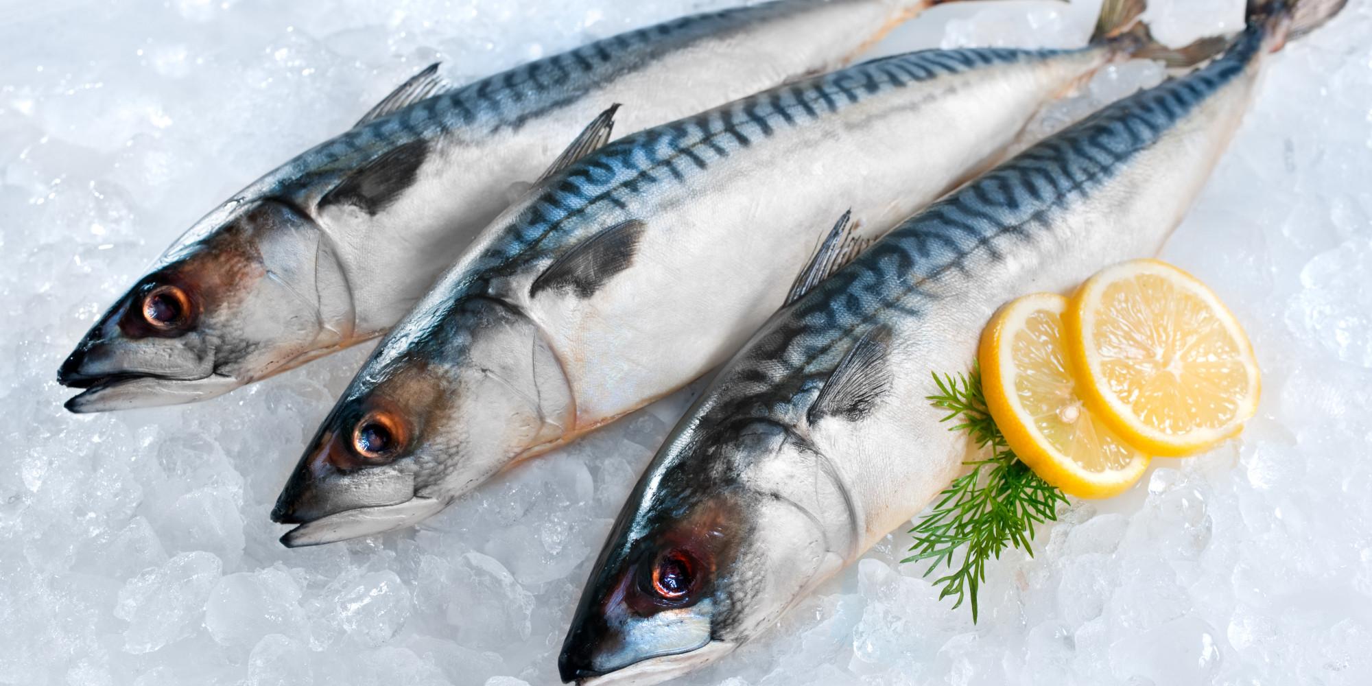 Uskumru - Scumbrians ailesinin balık 9